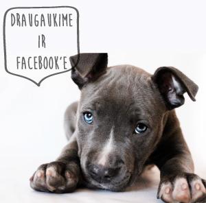 draugaukime-facebook